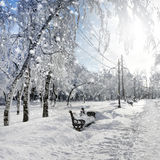 冬天自然,暴风雪 免版税图库摄影