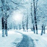冬天自然,暴风雪 免版税库存照片