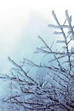 冬天芒特-万绅-冻结的结构树 库存图片