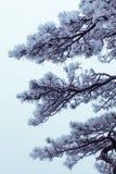 冬天芒特-万绅-冻结的结构树 免版税库存图片