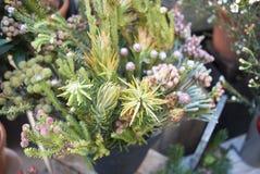 冬天花卉构成 库存图片