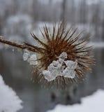 冬天花 免版税库存照片
