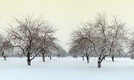 冬天苹果庭院 库存图片