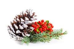 冬天莓果和锥体 免版税库存图片