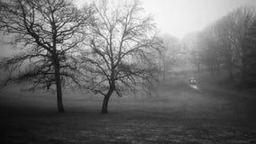 冬天薄雾在公园 免版税库存图片