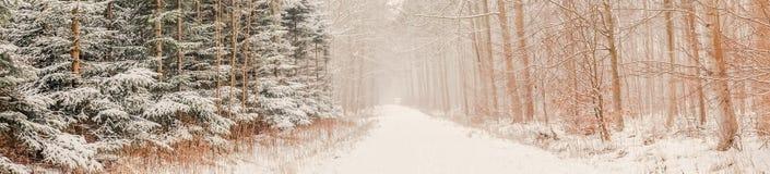 冬天薄雾在森林里 免版税库存照片