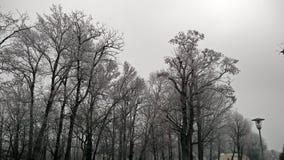 冬天街道冷淡的冷的雪奥地利Florianigasse操场 免版税库存照片
