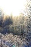 冬天被日光照射了森林 免版税库存照片