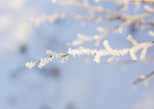 冬天装饰 免版税库存照片