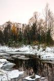 冬天西伯利亚人风景 河不在冬天结冰 在黄色针的落叶松属 免版税库存图片