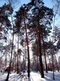 冬天西伯利亚森林,鄂木斯克地区 免版税库存照片