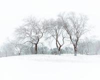 冬天视图在森林里 免版税库存图片