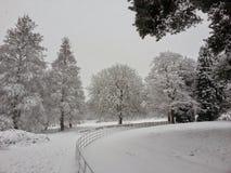 冬天设置 图库摄影