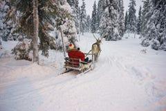 冬天赛跑在Ruka的驯鹿雪撬在拉普兰在芬兰 免版税库存照片