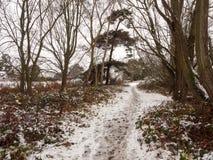 冬天走道道路穿过森林积雪的地板树 免版税库存照片