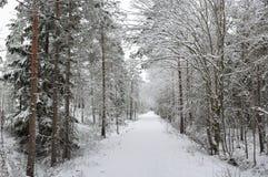 冬天足迹在森林里 免版税图库摄影