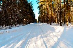 冬天路在具球果森林里 免版税图库摄影