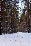 冬天路在具球果森林里 图库摄影