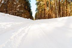 冬天路在具球果森林里 免版税库存照片