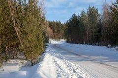 冬天路在杉树森林里在一个明亮的晴天 图库摄影