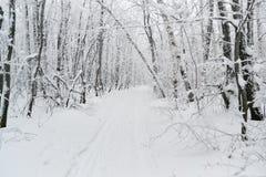 冬天路在森林里 免版税库存图片