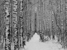 冬天路在森林里 库存照片