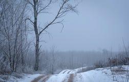 冬天路在森林里 库存图片