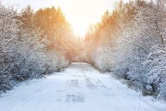 冬天路在森林 库存图片