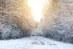 冬天路在森林 免版税库存照片