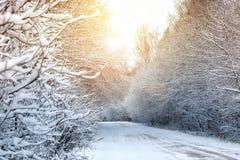 冬天路在森林 免版税库存图片
