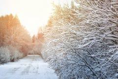 冬天路在森林 免版税图库摄影