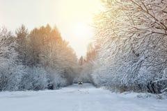 冬天路在森林 库存照片