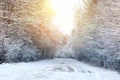 冬天路在森林 图库摄影