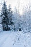 冬天路在被盖的雪森林里 库存照片