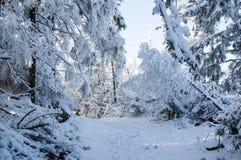冬天路在被盖的雪森林里 库存图片