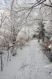冬天路在被盖的雪森林里 图库摄影