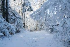 冬天路在被盖的雪森林里 免版税库存图片