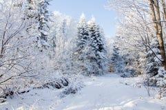 冬天路在被盖的雪森林里 免版税库存照片