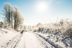 冬天路在晴天 图库摄影