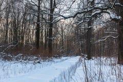 冬天路通过森林,在雪报道的树枝 免版税库存图片