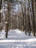 冬天路通过森林 库存照片