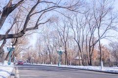 冬天路风景 库存照片