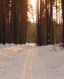 冬天路,有杉树的森林在日落 免版税图库摄影