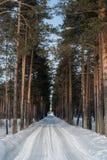 冬天路,有杉树的森林 免版税库存图片