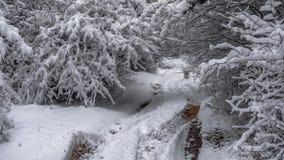 冬天轨道在森林里 免版税库存照片