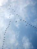 冬天迁移--驶向南部在冬天的候鸟 库存照片