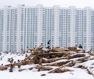 从冬天返回的白嘴鸦和坐击倒的树反对Th 免版税库存图片