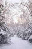 冬天道路 免版税库存图片