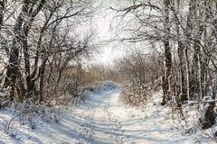 冬天道路 库存照片