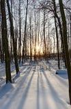 冬天阳光 免版税库存图片